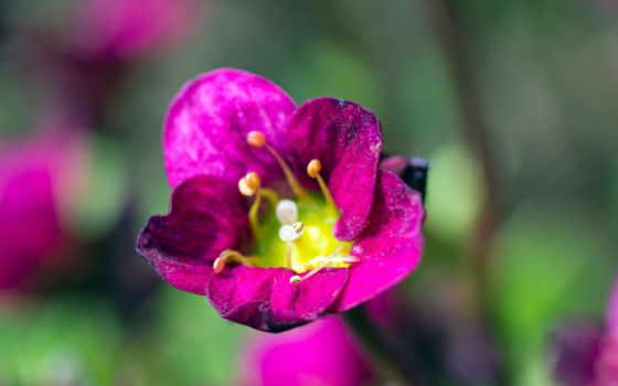 бах, фиолетовые, sunnah, cvety, natur, steine, wälder,