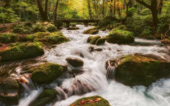 лес, ручей, природа