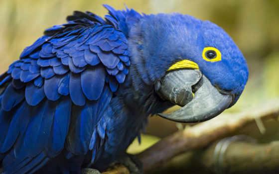 попугай, мире, большой, macaw, птицы,