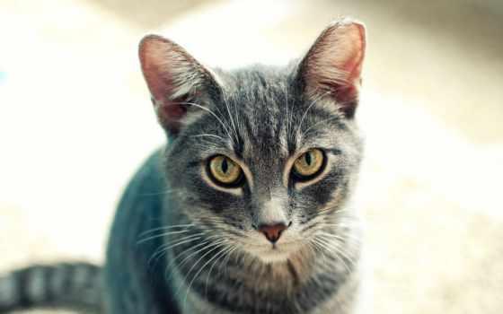 кот, art, этом, тематика, красивый, collect, funny