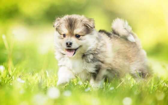 animal, best, cute, loaded, уж