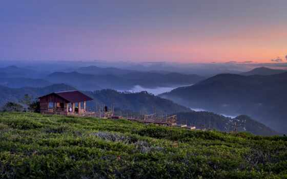 hill, чая, станция, зелёный, дат, поезд, dalat, плантация, bus, сквозь, фото