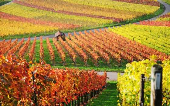виноградники, фотографиях, красные, carpe, арле, french, очень, ван, фотографий, природотерапия, cheaptrip,