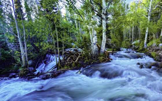 музыка, лес, fondos, hz, solfeggio, pantalla, rushing, bosque,