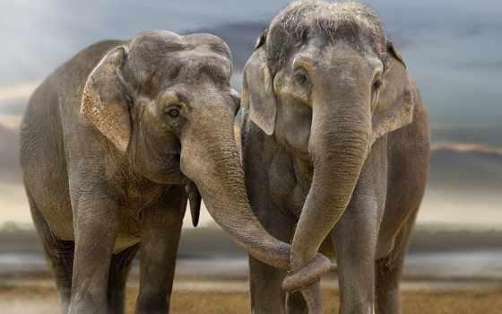pair, слоны, номерам