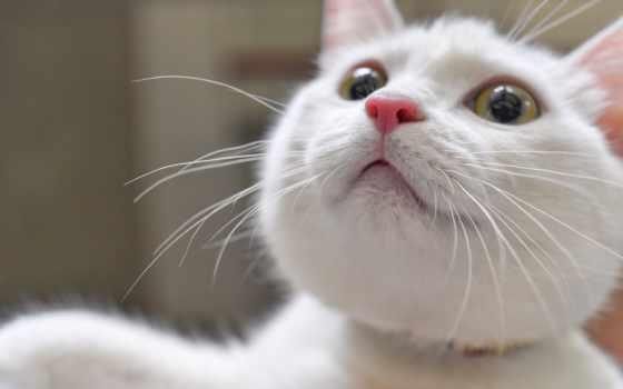 кот, кошки, планшета, телефона, ноутбука, зелёный, black, white,