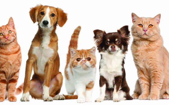 кошки, собаки, нов Фон № 58748 разрешение 3046x1614