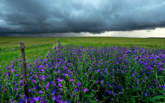 буря, поле, landscape