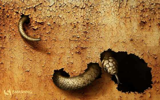 snake, dangerous, this, июл,