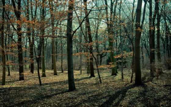 лес, осень, bare, поздняя, свет, trees, park,
