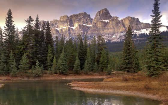 boreal, bosque, лес, del, thinglink, banff, taiga, изображение,