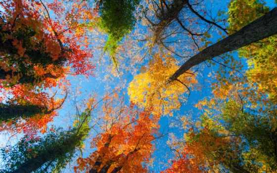 осень, фон, изображение, лес, деревья, впервые, день, photos,