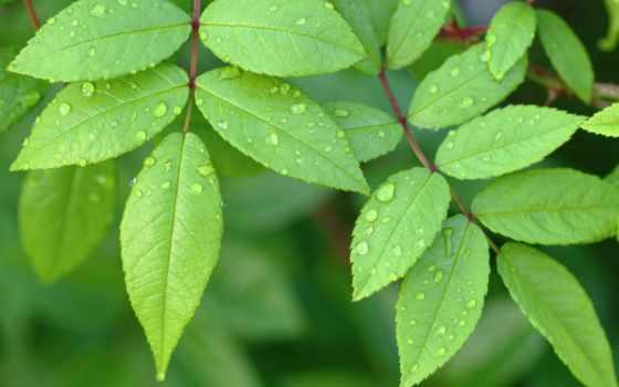 листья, зелёный, little, картинка, листва, pixels, zhivotnye, часы,
