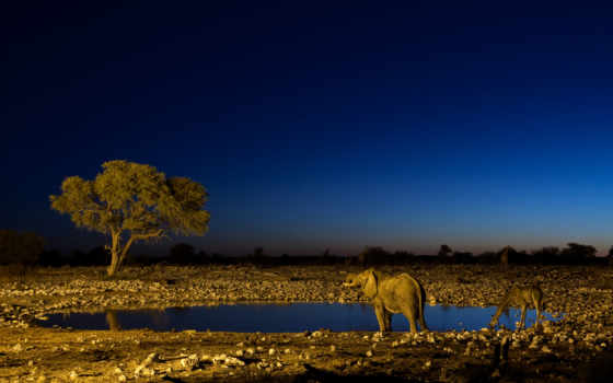 etosha, namibia, national, park, nazionale, parco, kunene, twyfelfontein, travel,