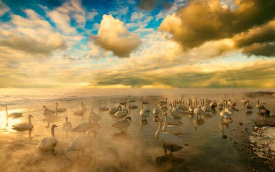 поле, картинка, небо, april, птица