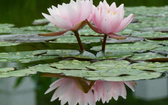 цветы, flowers Фон № 16198 разрешение 1920x1200