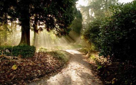 дорога, природа, свет, солнце, лес, деревья, красивые, парке, летнем, тропинки, лучи, компьютерные, природы,