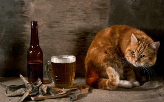 кот, рыба, пиво, рыжий, кошки, бутылка, картинка, коты, подозрительный, животные,