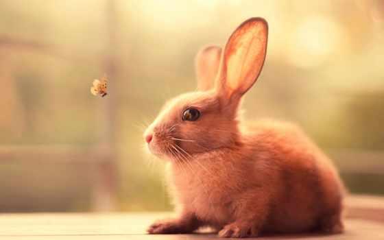 кроликов, марта, ago