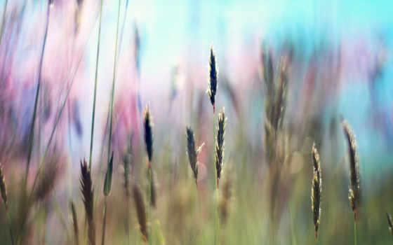 summer, трава, свет, поле, свежесть, sun, rays, тепло,