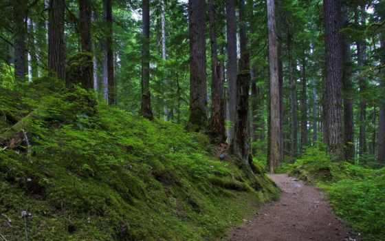лес, пейзажи -, national, rainier, mount, park, горы,