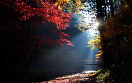 best, лес, trees