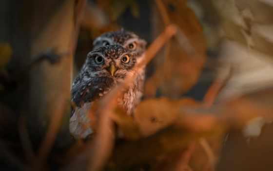 ,, сова, птица, живая природа, хищная птица, глаз,