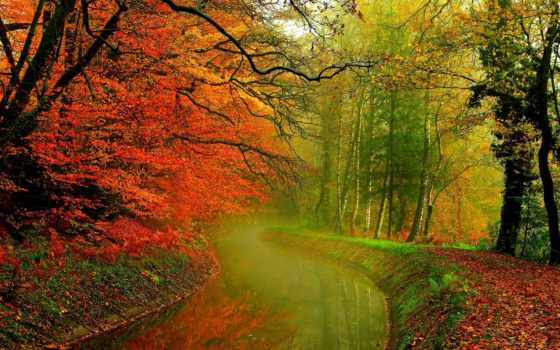 природа, дек, trees