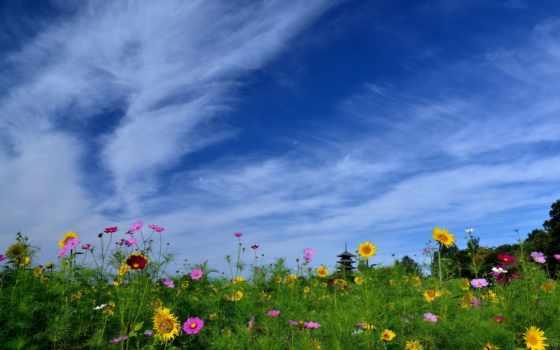 japanese, pillangóvirág, япония, космея, пейзажи -, viva, ana, tereza, laborda, параметры, tapety,