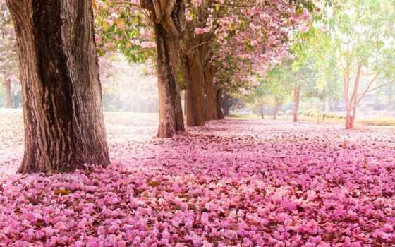 весна, Сакура, природа, cvety, цветение, trees, розовые, park, макро, branch,