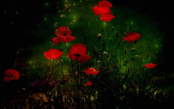 нежна, прекрасна, ночь, красивые, маки, текстура, tapety, cvety, февр, лес,