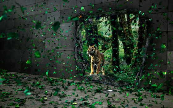 красивые, zhivotnye, тигр, очень, тигры,