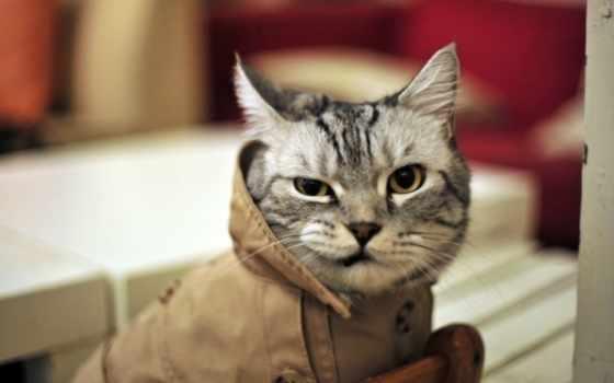 кот, funny, cats, котиков, you, benson, детектив, юмор,