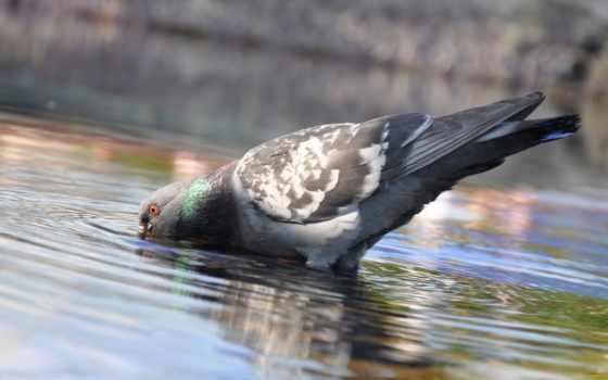 голубь, птица, голубей, жизни, пневмония, косметика, птиц, мире, нити, хирургические,