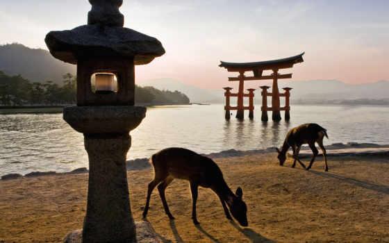 miyajima, япония, остров, тории, gate, itsukushima, stock,