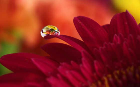 дождя, капелька, осеннем, цветке, будто, от, грусти, время, они, свой,