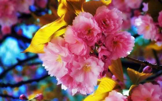 цветы, flowers, красивые