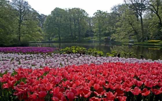 keukenhof, lisse, нидерланды, park, природа, изображение, free, national,
