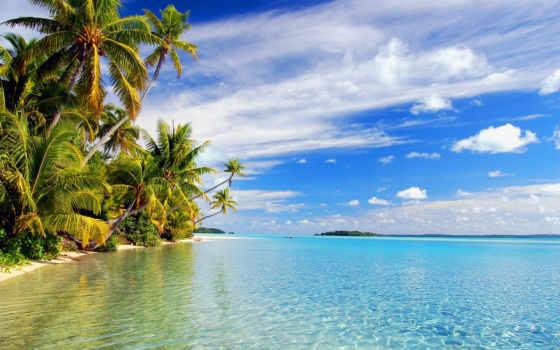 пальмы, место, море, toad, ocean, природа, райское,