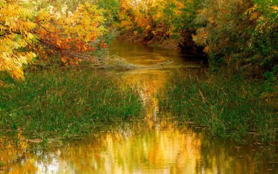 природа, красивая, full, широкоформатные, листва, осень,