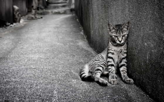 loneliness, одинокий, кот, улица, день,