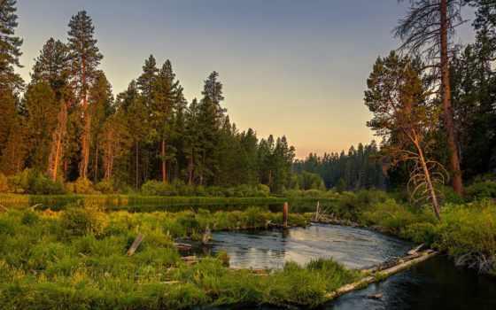 река, лес, природа, спокойная, вечер, trees, красивые, бесплатные,
