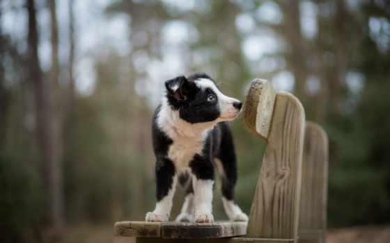 собака, телефон, ноутбук, spotted, щенок, фон, sit, скамейка, планшетный