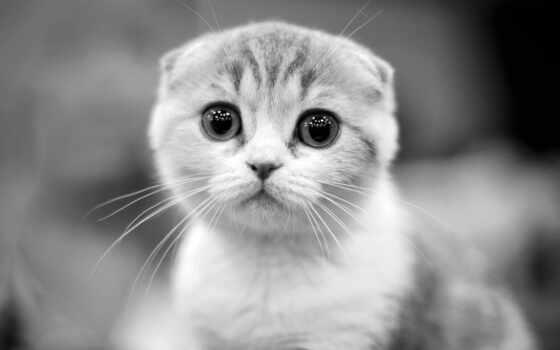 кот, палуба, коты, white, black, красивый, фотограф