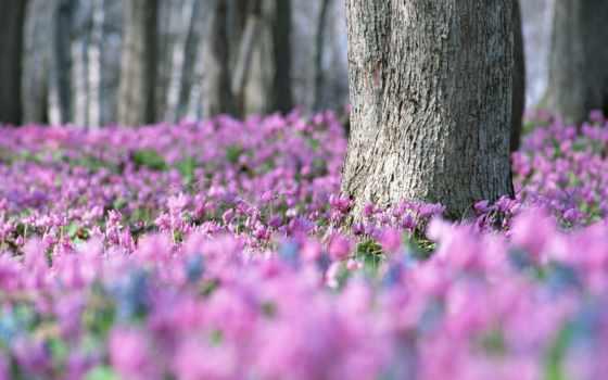 весна, марта, коллекция