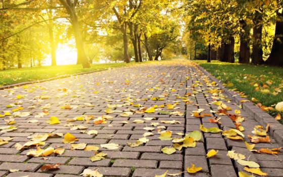 красивые, осень, качественные