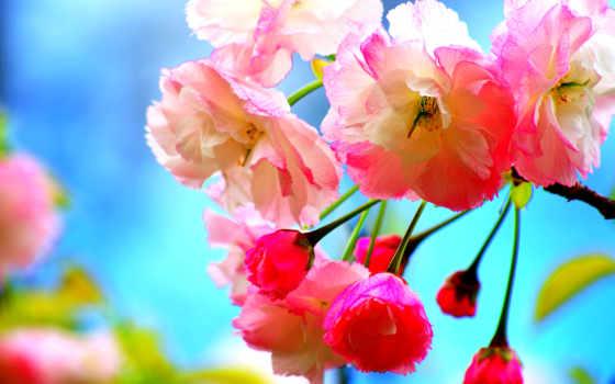 flores, parede, primavera