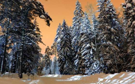 природа, зимняя, лес, winter, хвойный, снег, разрешениях, разных, оригинальные, зимние, landscape,
