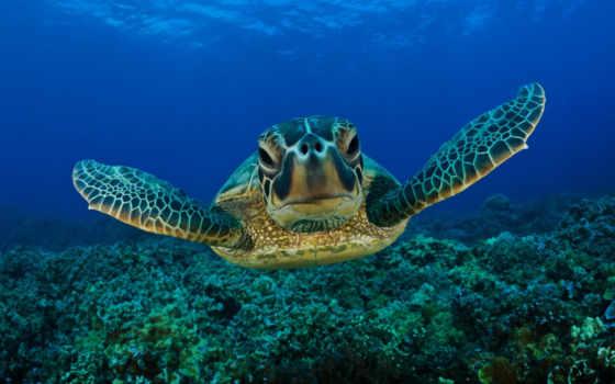 море, океана, animals, ocean, индийского, fauna, черепаха, flora,