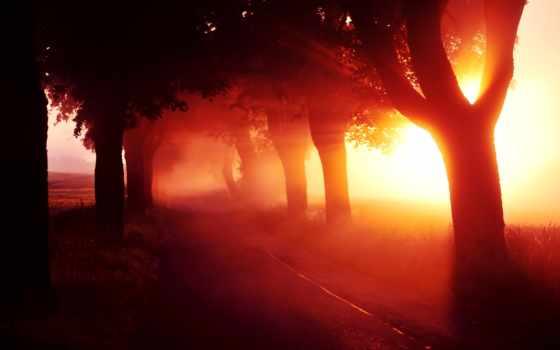 темы, день, каждый, природа, red, закат, дерево, ноутбук, аллея,
